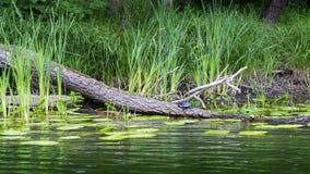 De kleine schildpad zit op een gevallen boom Royalty-vrije Stock Fotografie
