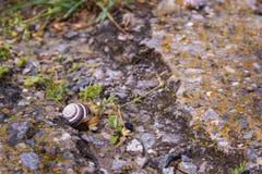 De kleine slak kruipt langs een vernietigde weg met groen gras royalty-vrije stock afbeeldingen