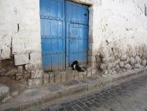 De kleine Straathond wacht geduldig op iemand Stock Afbeeldingen