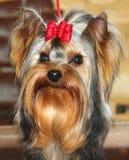 De kleine terriër van hondYorkshire  royalty-vrije stock foto's