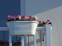 De kleine van het de tuinterras van het dakbalkon ingemaakte bloemen Royalty-vrije Stock Fotografie