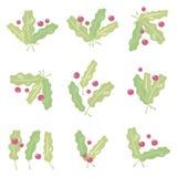 De kleine vectorsamenstelling van geschilderde eiken groen lichtbladeren met aders en schittert, en rode die bessen van een vosse stock illustratie