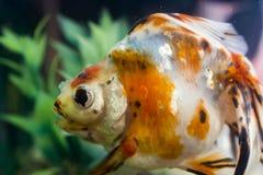 De kleine vissen van Aquarian stock foto