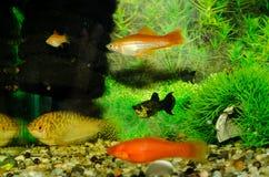 De kleine vissen van Aquarian royalty-vrije stock foto