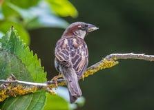 De kleine vogels van de zomer! Stock Foto