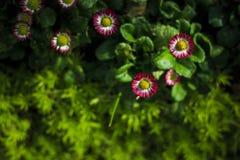 De kleine witte en roze bloemen in de ochtend Royalty-vrije Stock Foto's