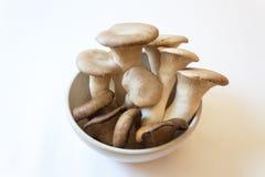 De kleine witte kom van Pleurotus-eryngiikoning Trumpet Mushrooms en Pleurotus-ostreatusoester schiet als paddestoelen uit de gro Stock Foto