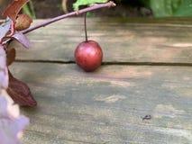 De kleinste slak die ik ooit heb gezien! royalty-vrije stock afbeelding