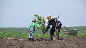 De kleinzoon en de kleinzoon planten een boom samen, de opa van de kindhulp, groepswerk stock videobeelden