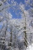 De kleren van de winter van bomen stock afbeelding