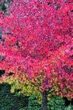 De kleur en het palet van de aard Royalty-vrije Stock Foto