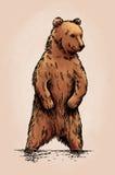 De kleur graveert geïsoleerde grizzly Royalty-vrije Stock Afbeelding