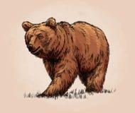 De kleur graveert geïsoleerde grizzly Stock Afbeeldingen