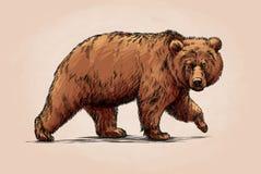 De kleur graveert geïsoleerde grizzly Royalty-vrije Stock Foto's