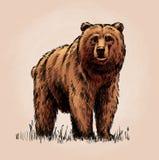 De kleur graveert geïsoleerde grizzly Royalty-vrije Stock Foto