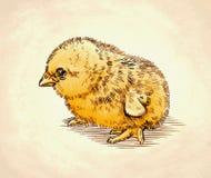 De kleur graveert geïsoleerde kippenillustratie Royalty-vrije Stock Foto