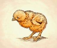 De kleur graveert geïsoleerde kippenillustratie Stock Foto
