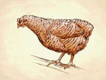 De kleur graveert geïsoleerde kippenillustratie Stock Fotografie