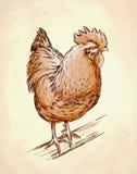 De kleur graveert geïsoleerde kippenillustratie Stock Foto's