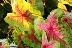 De kleur van de bladeren Royalty-vrije Stock Afbeelding