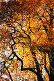 De kleur van de herfst Stock Afbeelding