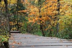 De kleur van de herfst Stock Foto