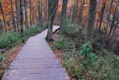 De kleur van de herfst Stock Fotografie