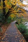 De kleur van de herfst Royalty-vrije Stock Foto's