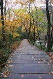 De kleur van de herfst Stock Foto's