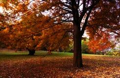De Kleur van de herfst Royalty-vrije Stock Foto