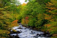 De Kleur van de herfst langs de Rivier van Smith Royalty-vrije Stock Foto's
