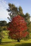 De kleur van de herfst op bosbomen stock foto