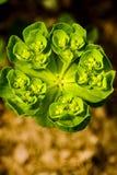 De kleur van de lente Royalty-vrije Stock Foto's