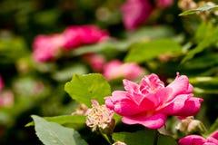 De kleur van de lente Royalty-vrije Stock Afbeelding