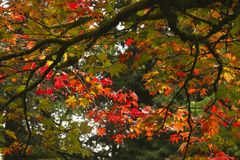De kleur van de herfst/daling gaat weg stock foto's
