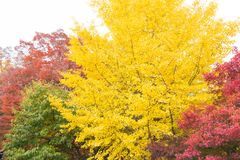 De kleur van de de lenteverandering Stock Foto's