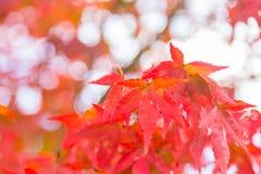 De kleur van de de lenteverandering Stock Afbeelding