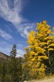 De Kleuren Colorado van de daling Stock Fotografie