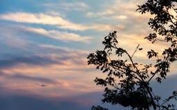 De kleuren en het contrast van het eind van een middag stock afbeelding