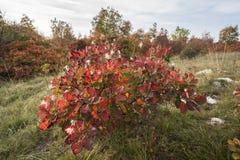 De kleuren in de herfst Royalty-vrije Stock Afbeelding