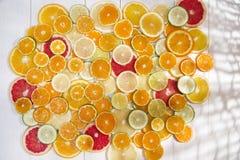 De kleuren van citrusvruchten Stock Foto's