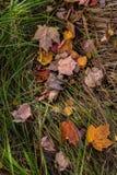 De kleuren van daling stock foto