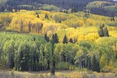 De kleuren van de dalingsherfst in Kebler-Pas, Colorado Amerika in Autumn Fall royalty-vrije stock foto's