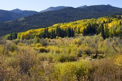De kleuren van de dalingsherfst in Kebler-Pas, Colorado Amerika in Autumn Fall royalty-vrije stock foto