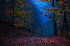 De kleuren van de avondherfst royalty-vrije stock afbeeldingen