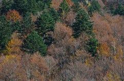 De kleuren van de bomen in de herfst Royalty-vrije Stock Fotografie