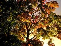 De kleuren van de daling Royalty-vrije Stock Foto
