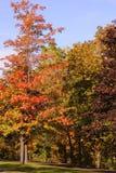 De kleuren van de daling Royalty-vrije Stock Afbeeldingen