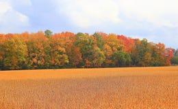 De kleuren van de daling Stock Foto