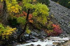 De kleuren van de daling Royalty-vrije Stock Foto's